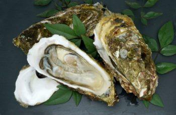 牡蠣 冷凍,牡蠣 冷凍 保存,牡蠣 冷凍 保存 方法,牡蠣 冷凍 保存 下処理,牡蠣 冷凍 保存 解凍方法
